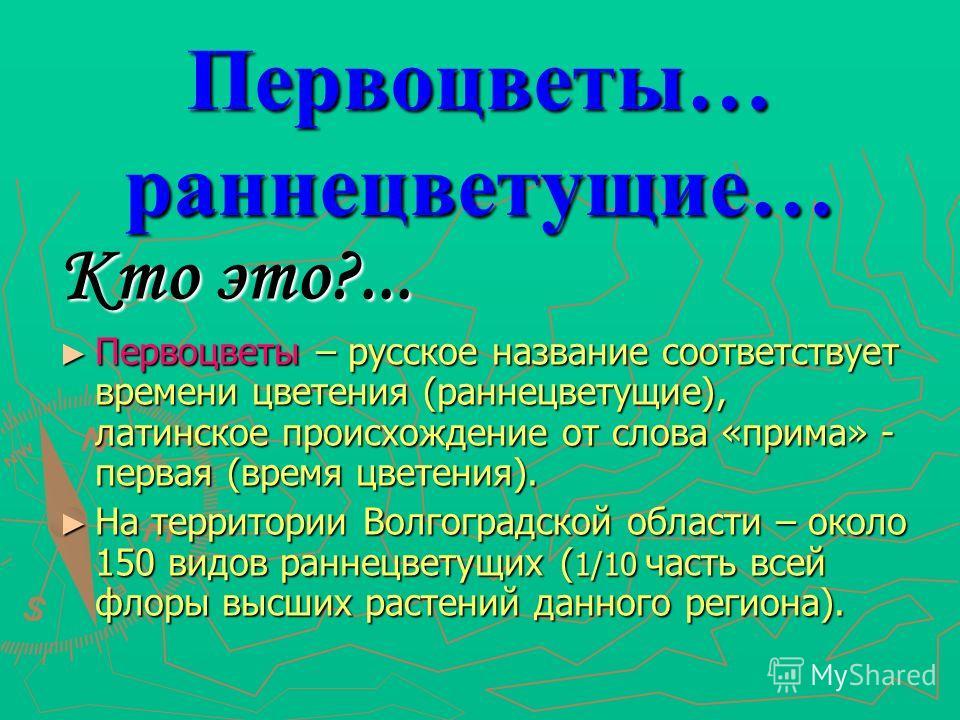 Первоцветы… раннецветущие… Кто это?... Первоцветы – русское название соответствует времени цветения (раннецветущие), латинское происхождение от слова «прима» - первая (время цветения). На территории Волгоградской области – около 150 видов раннецветущ