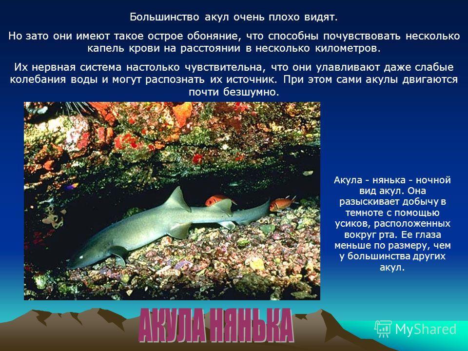 Большинство акул очень плохо видят. Но зато они имеют такое острое обоняние, что способны почувствовать несколько капель крови на расстоянии в несколько километров. Их нервная система настолько чувствительна, что они улавливают даже слабые колебания