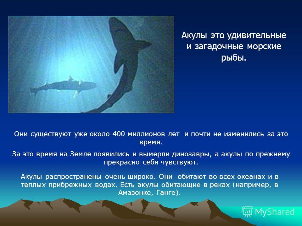 Они существуют уже около 400 миллионов лет и почти не изменились за это время. За это время на Земле появились и вымерли динозавры, а акулы по прежнему прекрасно себя чувствуют. Акулы распространены очень широко. Они обитают во всех океанах и в теплы