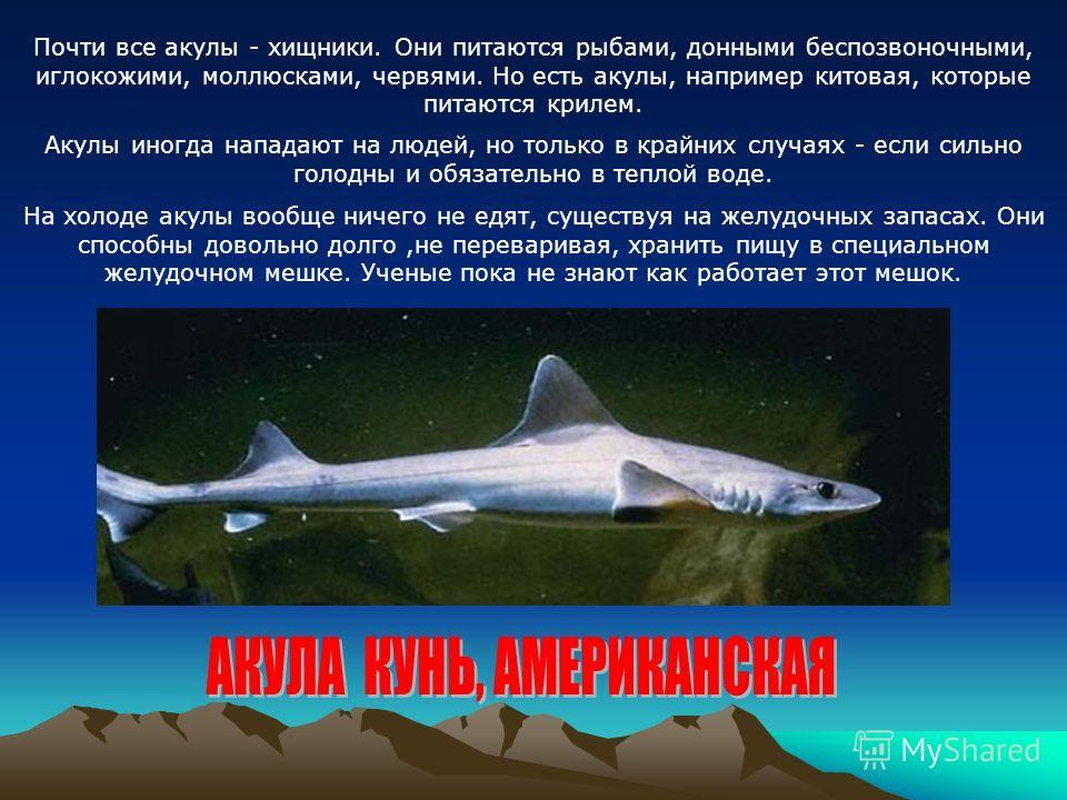 Почти все акулы - хищники. Они питаются рыбами, донными беспозвоночными, иглокожими, моллюсками, червями. Но есть акулы, например китовая, которые питаются крилем. Акулы иногда нападают на людей, но только в крайних случаях - если сильно голодны и об