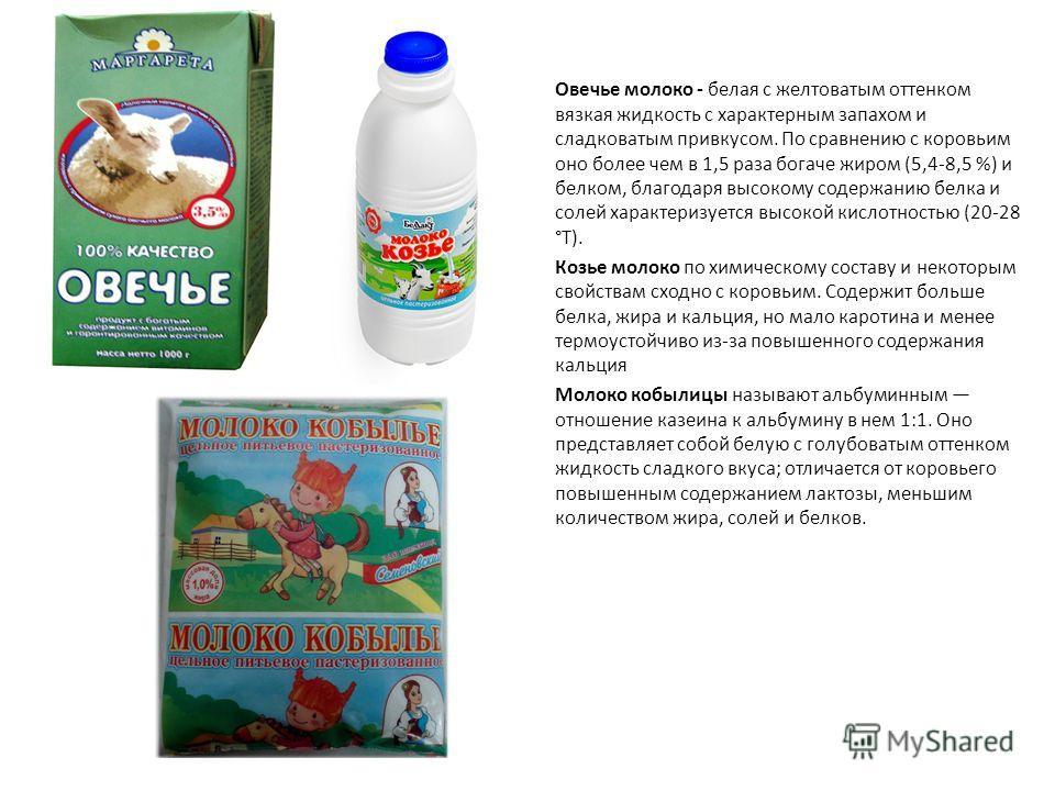 Овечье молоко - белая с желтоватым оттенком вязкая жидкость с характерным запахом и сладковатым привкусом. По сравнению с коровьим оно более чем в 1,5 раза богаче жиром (5,4-8,5 %) и белком, благодаря высокому содержанию белка и солей характеризуется