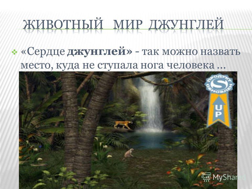 «Сердце джунглей» - так можно назвать место, куда не ступала нога человека...