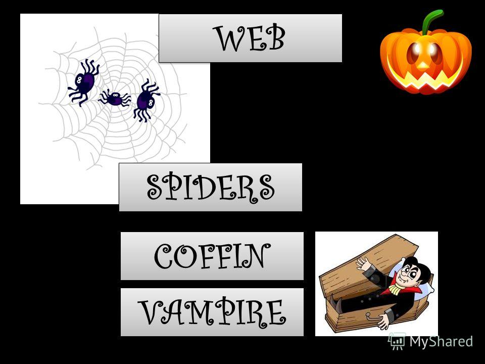COFFIN VAMPIRE SPIDERS WEB