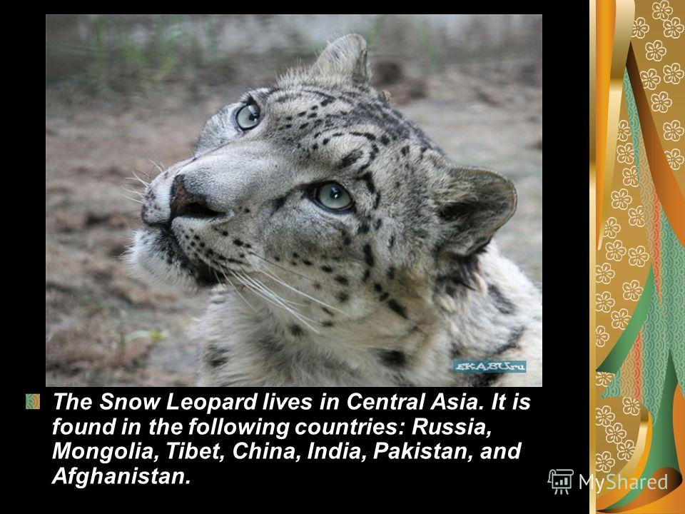 The Snow Leopard lives in Central Asia. It is found in the following countries: Russia, Mongolia, Tibet, China, India, Pakistan, and Afghanistan.