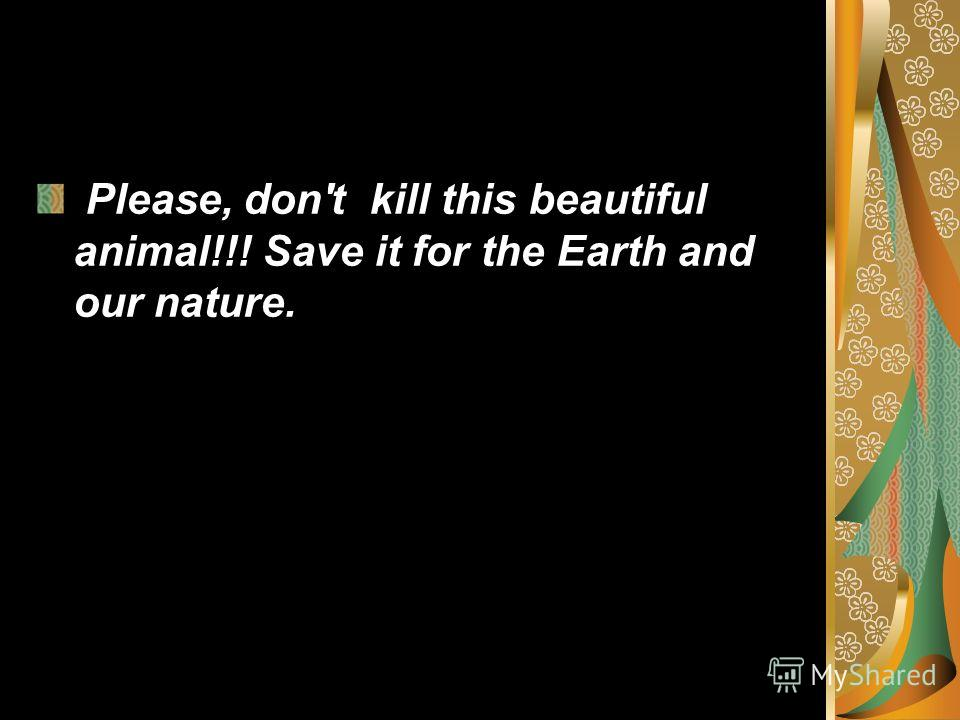 Please, don't kill this beautiful animal!!! Save it for the Earth and our nature. Please, don't kill this beautiful animal!!! Save it for the Earth and our nature.