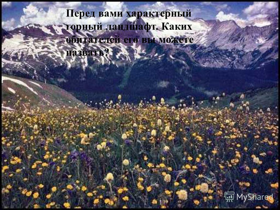 А в какой части Евразии живут они? бородач Ирбис Як Такин Винторогий козёл Перед вами характерный горный ландшафт. Каких обитателей его вы можете назвать?