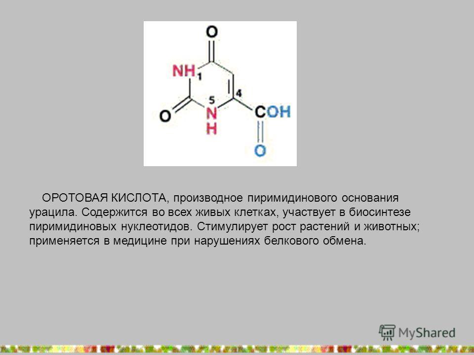 ОРОТОВАЯ КИСЛОТА, производное пиримидинового основания урацила. Содержится во всех живых клетках, участвует в биосинтезе пиримидиновых нуклеотидов. Стимулирует рост растений и животных; применяется в медицине при нарушениях белкового обмена.