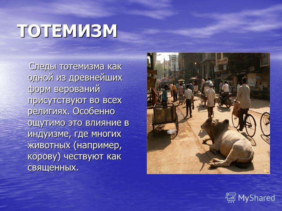 ТОТЕМИЗМ Следы тотемизма как одной из древнейших форм верований присутствуют во всех религиях. Особенно ощутимо это влияние в индуизме, где многих животных (например, корову) чествуют как священных. Следы тотемизма как одной из древнейших форм верова