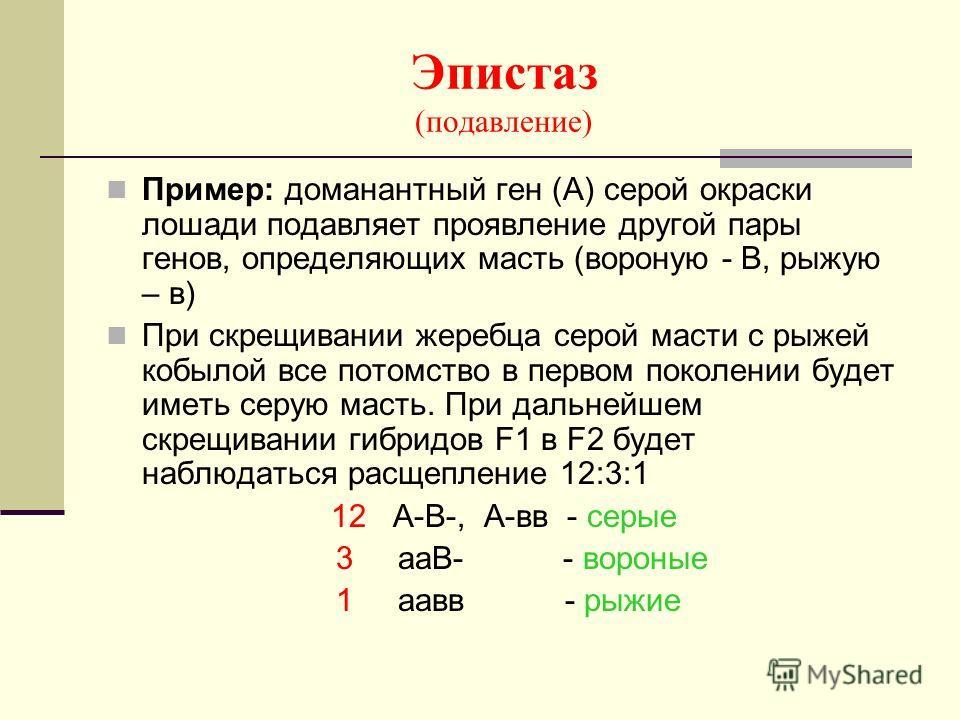 Эпистаз (подавление) Пример: доманантный ген (А) серой окраски лошади подавляет проявление другой пары генов, определяющих масть (вороную - В, рыжую – в) При скрещивании жеребца серой масти с рыжей кобылой все потомство в первом поколении будет иметь