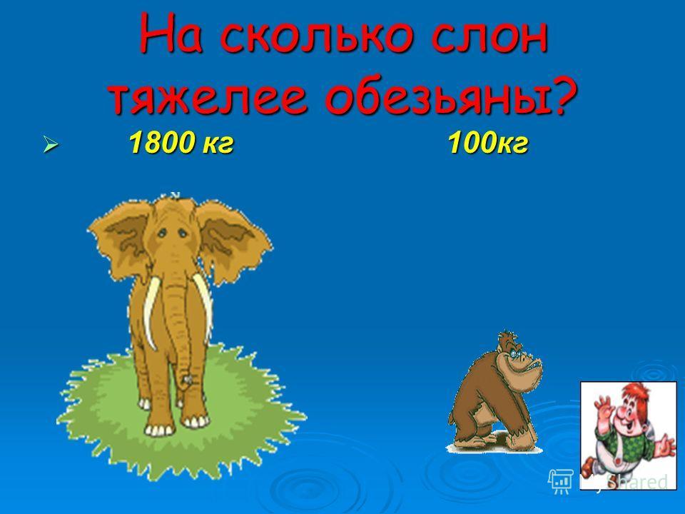 На сколько слон тяжелее обезьяны? 1800 кг 100кг 1800 кг 100кг