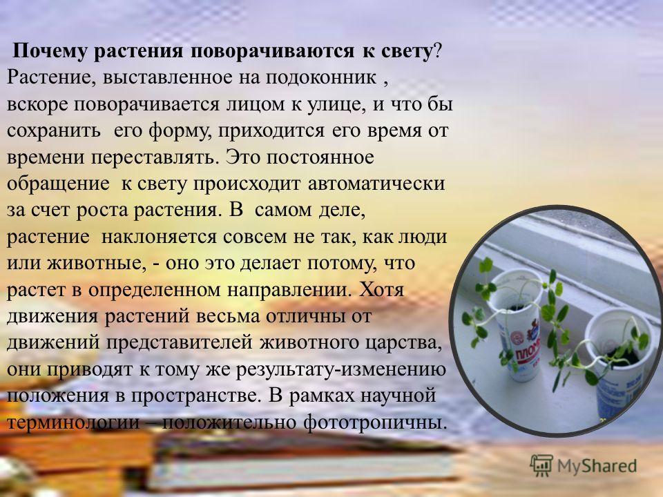 Почему растения поворачиваются к свету? Растение, выставленное на подоконник, вскоре поворачивается лицом к улице, и что бы сохранить его форму, приходится его время от времени переставлять. Это постоянное обращение к свету происходит автоматически з