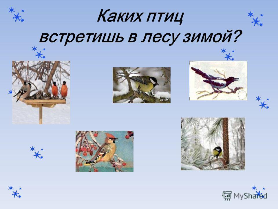 Каких птиц встретишь в лесу зимой?