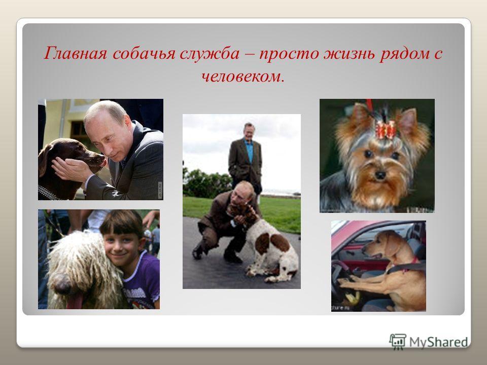 Главная собачья служба – просто жизнь рядом с человеком.