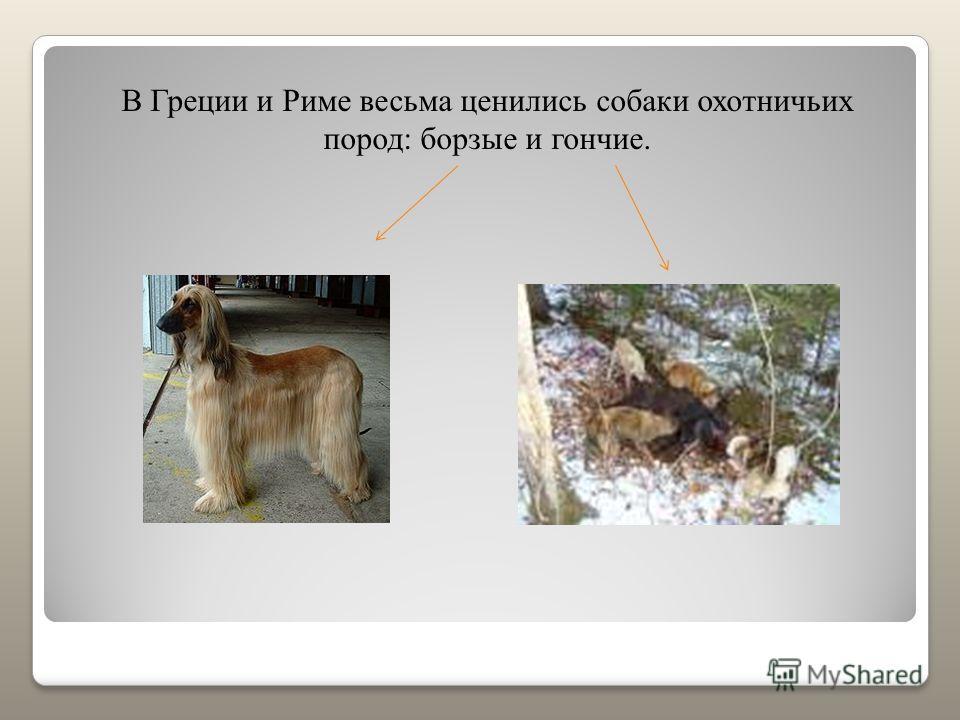 В Греции и Риме весьма ценились собаки охотничьих пород: борзые и гончие.