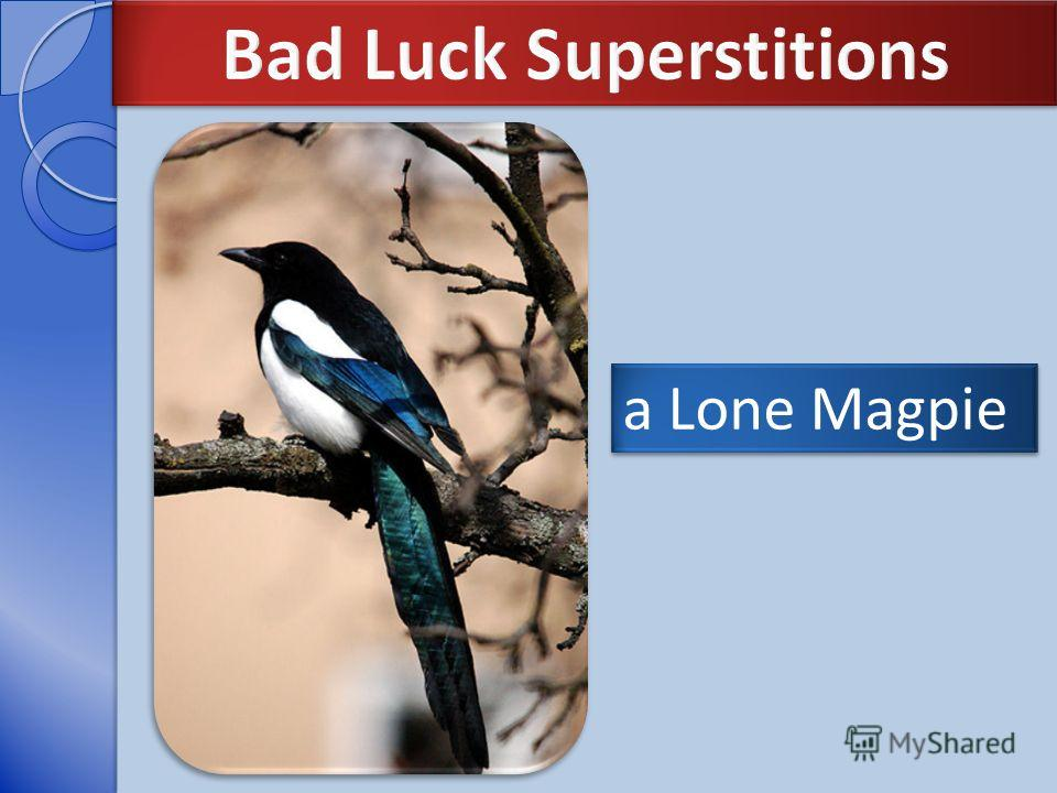 a Lone Magpie