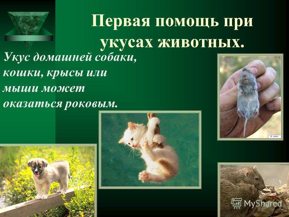 Укус домашней собаки, кошки, крысы или мыши может оказаться роковым.