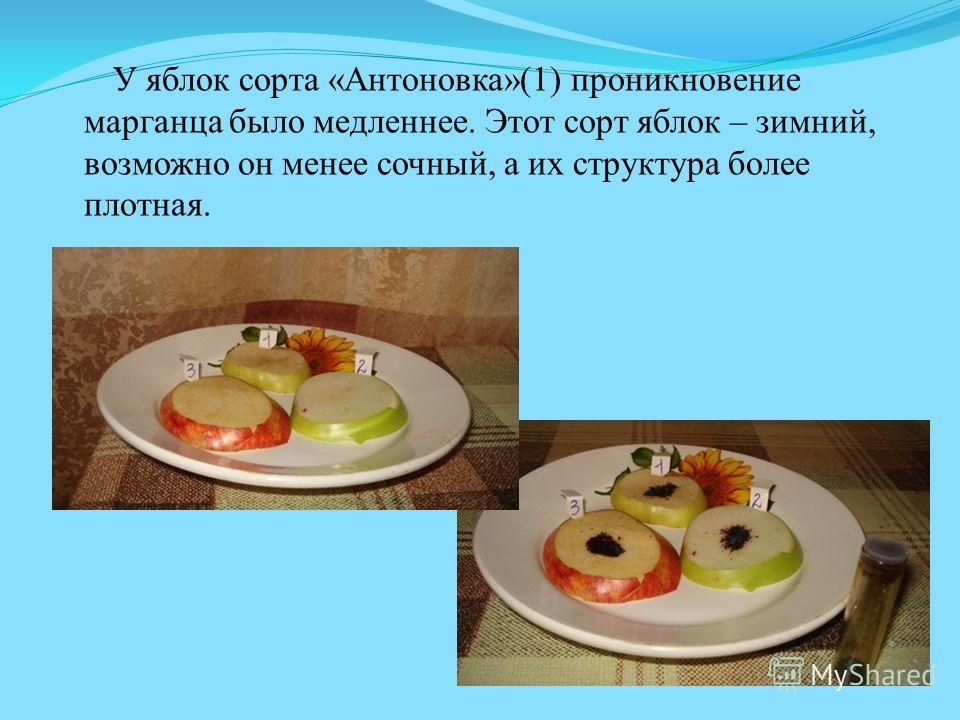 У яблок сорта «Антоновка»(1) проникновение марганца было медленнее. Этот сорт яблок – зимний, возможно он менее сочный, а их структура более плотная.