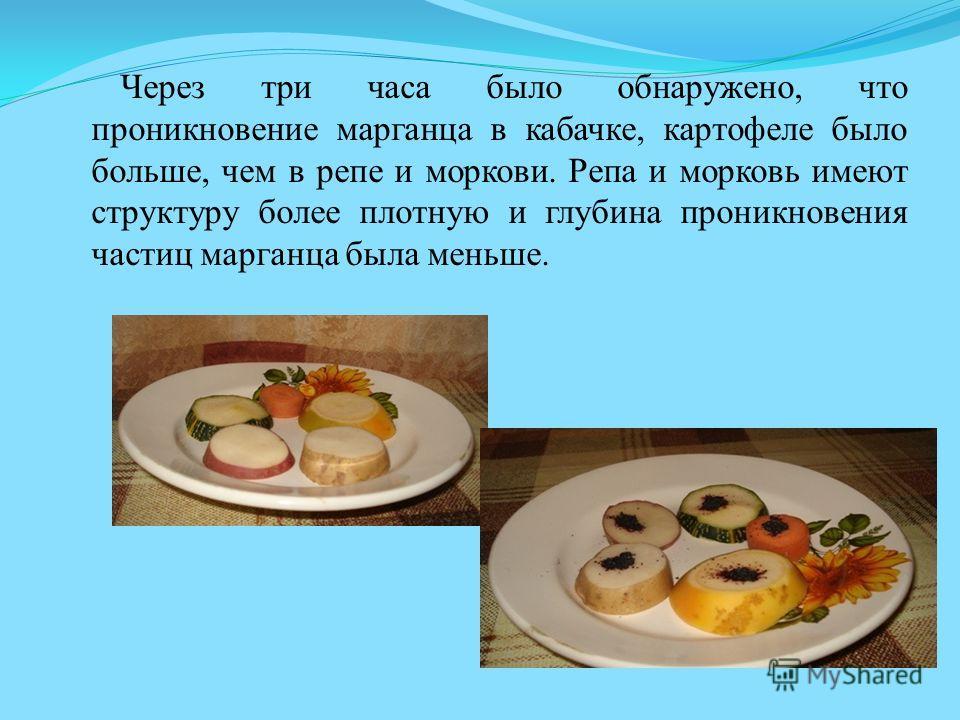 Через три часа было обнаружено, что проникновение марганца в кабачке, картофеле было больше, чем в репе и моркови. Репа и морковь имеют структуру более плотную и глубина проникновения частиц марганца была меньше.