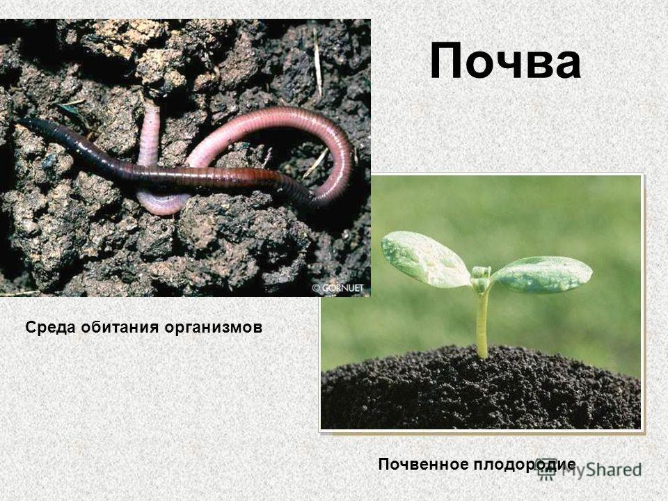 Почва Среда обитания организмов Почвенное плодородие