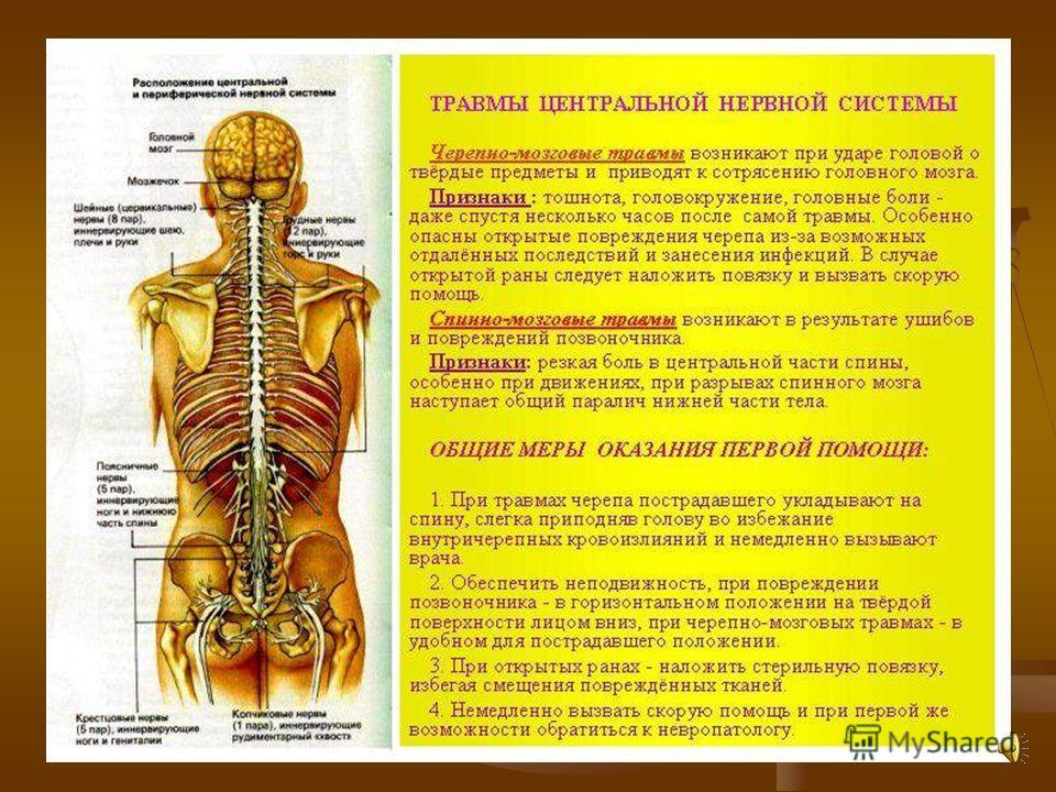 основе полипропилена российская разработка спинной мозг основные