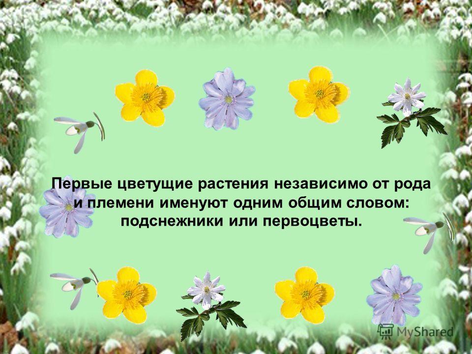 Первые цветущие растения независимо от рода и племени именуют одним общим словом: подснежники или первоцветы.