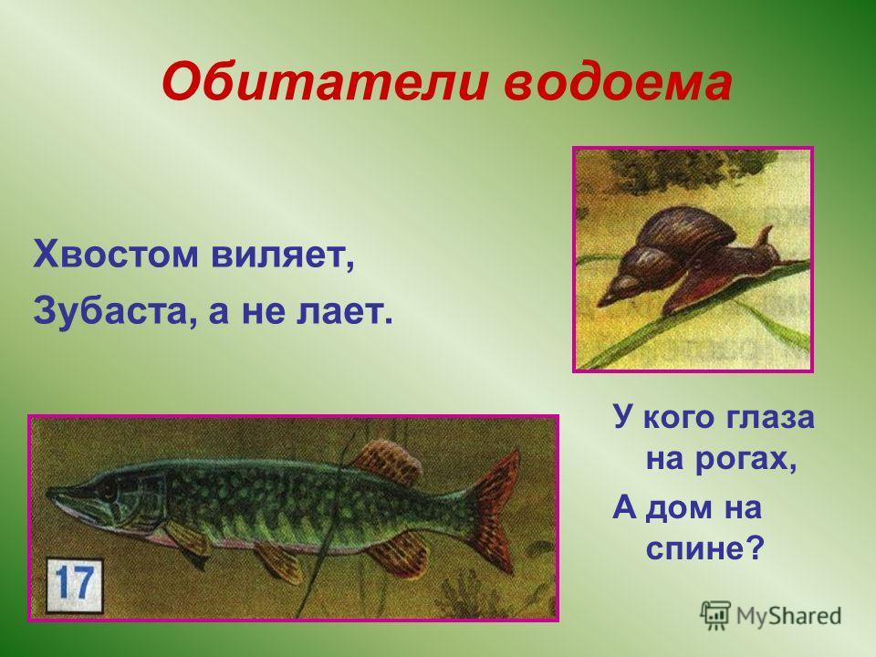 Обитатели водоема Хвостом виляет, Зубаста, а не лает. У кого глаза на рогах, А дом на спине?