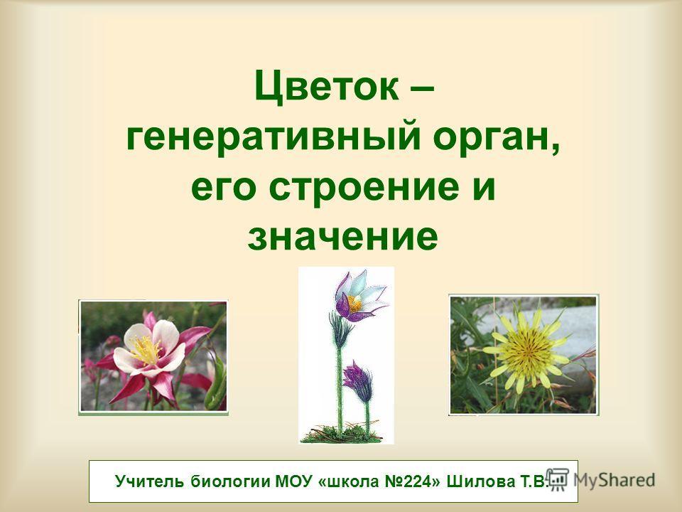 Цветок – генеративный орган, его строение и значение Учитель биологии МОУ «школа 224» Шилова Т.В.