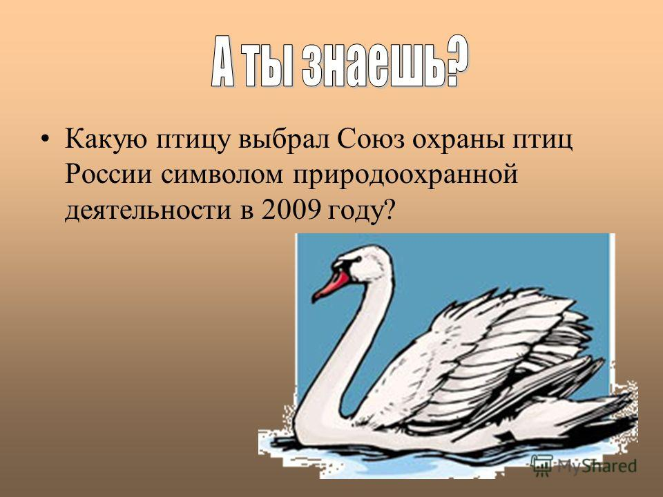Какую птицу выбрал Союз охраны птиц России символом природоохранной деятельности в 2009 году?