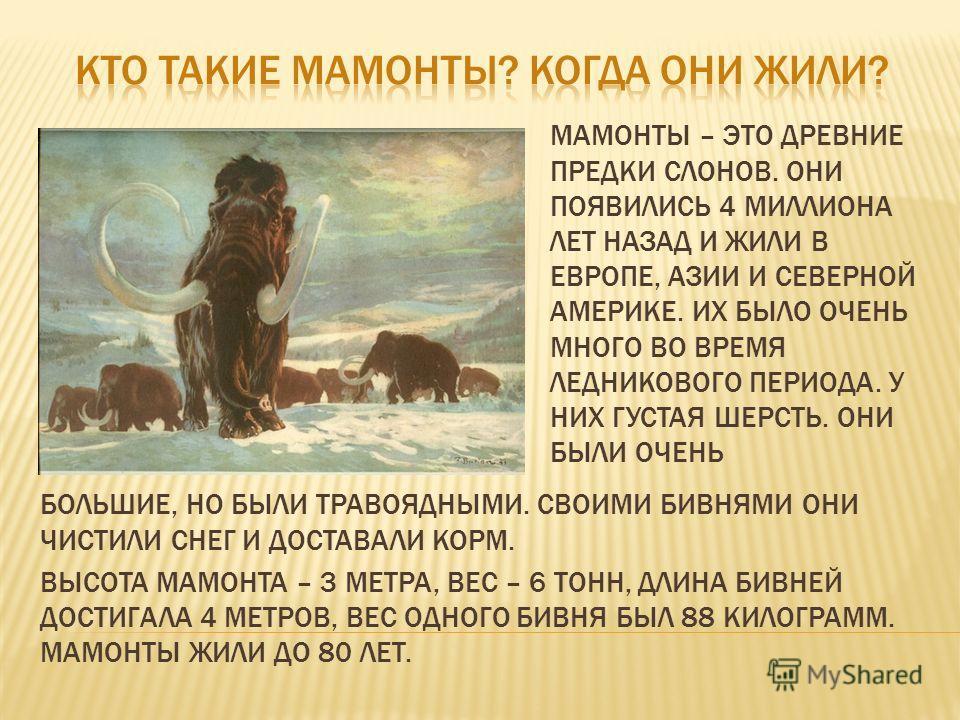 МАМОНТЫ – ЭТО ДРЕВНИЕ ПРЕДКИ СЛОНОВ. ОНИ ПОЯВИЛИСЬ 4 МИЛЛИОНА ЛЕТ НАЗАД И ЖИЛИ В ЕВРОПЕ, АЗИИ И СЕВЕРНОЙ АМЕРИКЕ. ИХ БЫЛО ОЧЕНЬ МНОГО ВО ВРЕМЯ ЛЕДНИКОВОГО ПЕРИОДА. У НИХ ГУСТАЯ ШЕРСТЬ. ОНИ БЫЛИ ОЧЕНЬ БОЛЬШИЕ, НО БЫЛИ ТРАВОЯДНЫМИ. СВОИМИ БИВНЯМИ ОНИ Ч