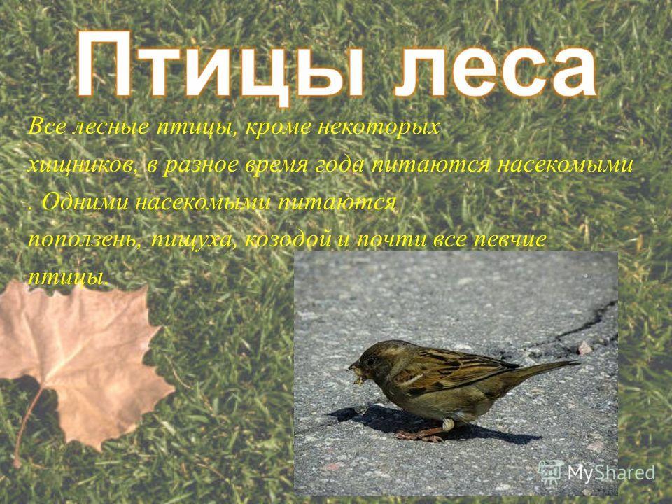 Все лесные птицы, кроме некоторых хищников, в разное время года питаются насекомыми. Одними насекомыми питаются поползень, пищуха, козодой и почти все певчие птицы.