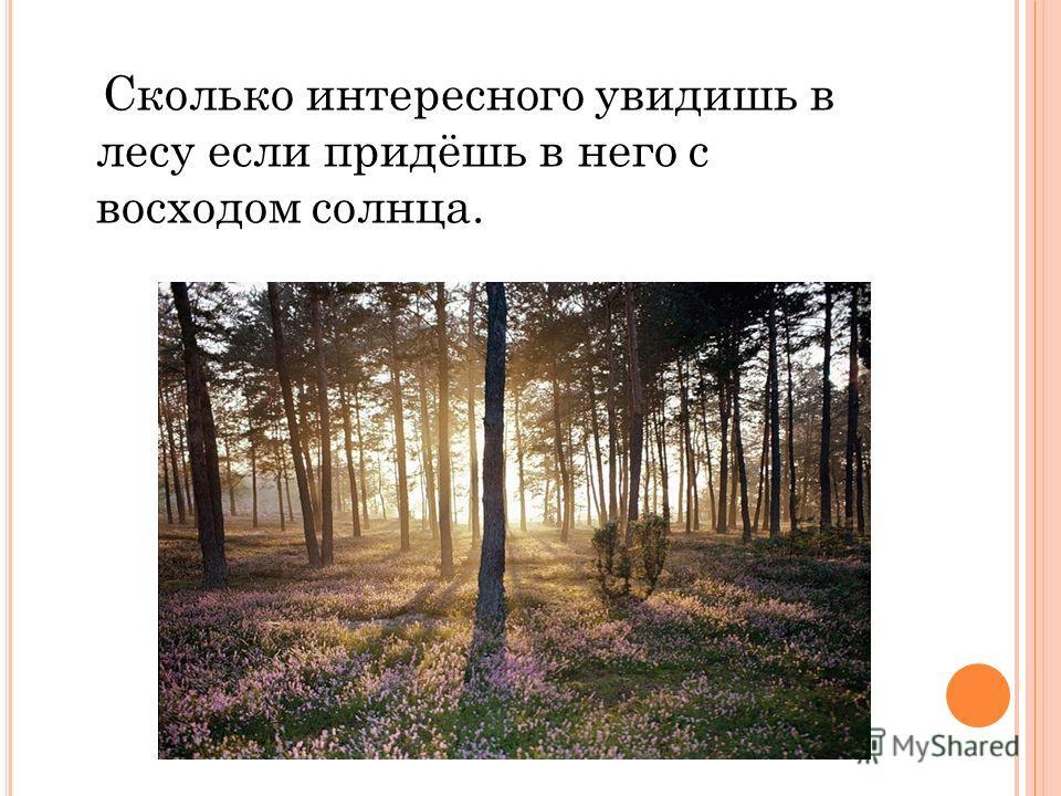 Сколько интересного увидишь в лесу если придёшь в него с восходом солнца.