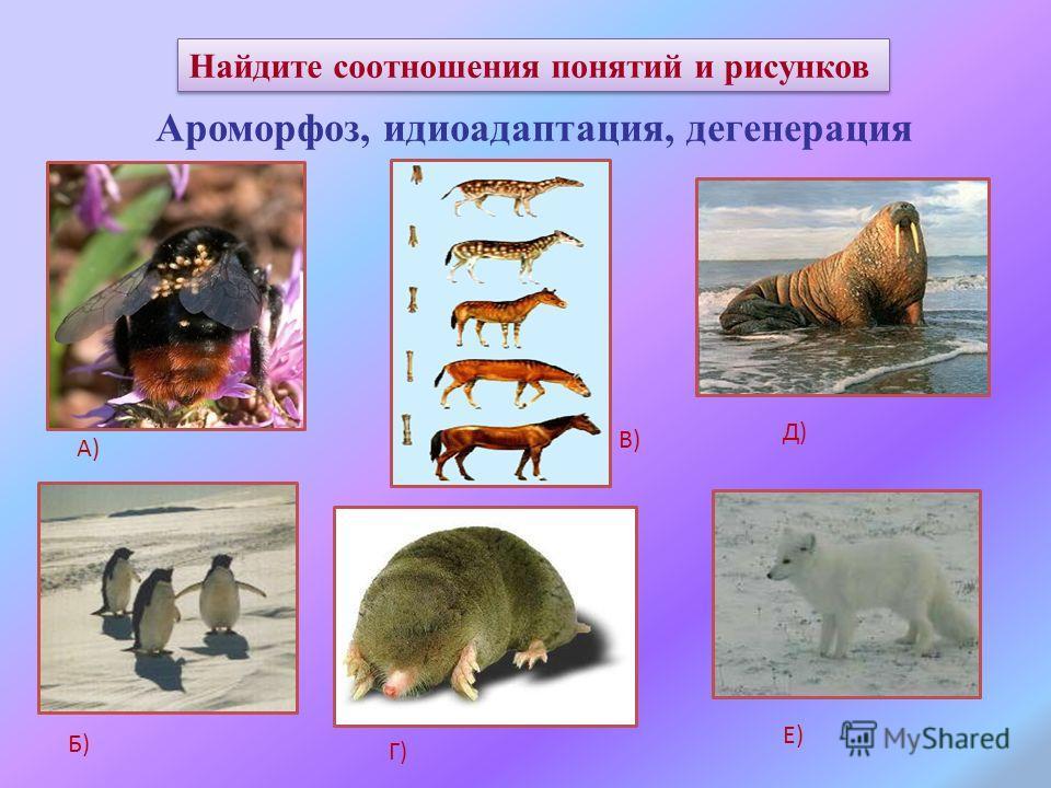 Найдите соотношения понятий и рисунков Ароморфоз, идиоадаптация, дегенерация А) Б) В) Г) Д) Е)