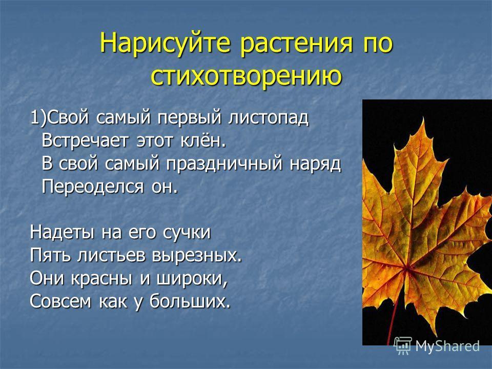 Нарисуйте растения по стихотворению 1)Свой самый первый листопад Встречает этот клён. Встречает этот клён. В свой самый праздничный наряд В свой самый праздничный наряд Переоделся он. Переоделся он. Надеты на его сучки Пять листьев вырезных. Они крас