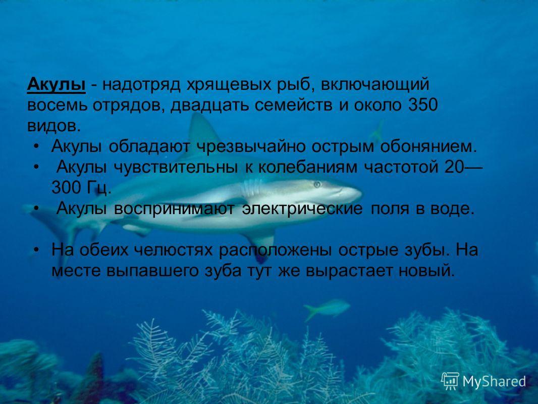 Акулы - надотряд хрящевых рыб, включающий восемь отрядов, двадцать семейств и около 350 видов. Акулы обладают чрезвычайно острым обонянием. Акулы чувствительны к колебаниям частотой 20 300 Гц. Акулы воспринимают электрические поля в воде. На обеих че