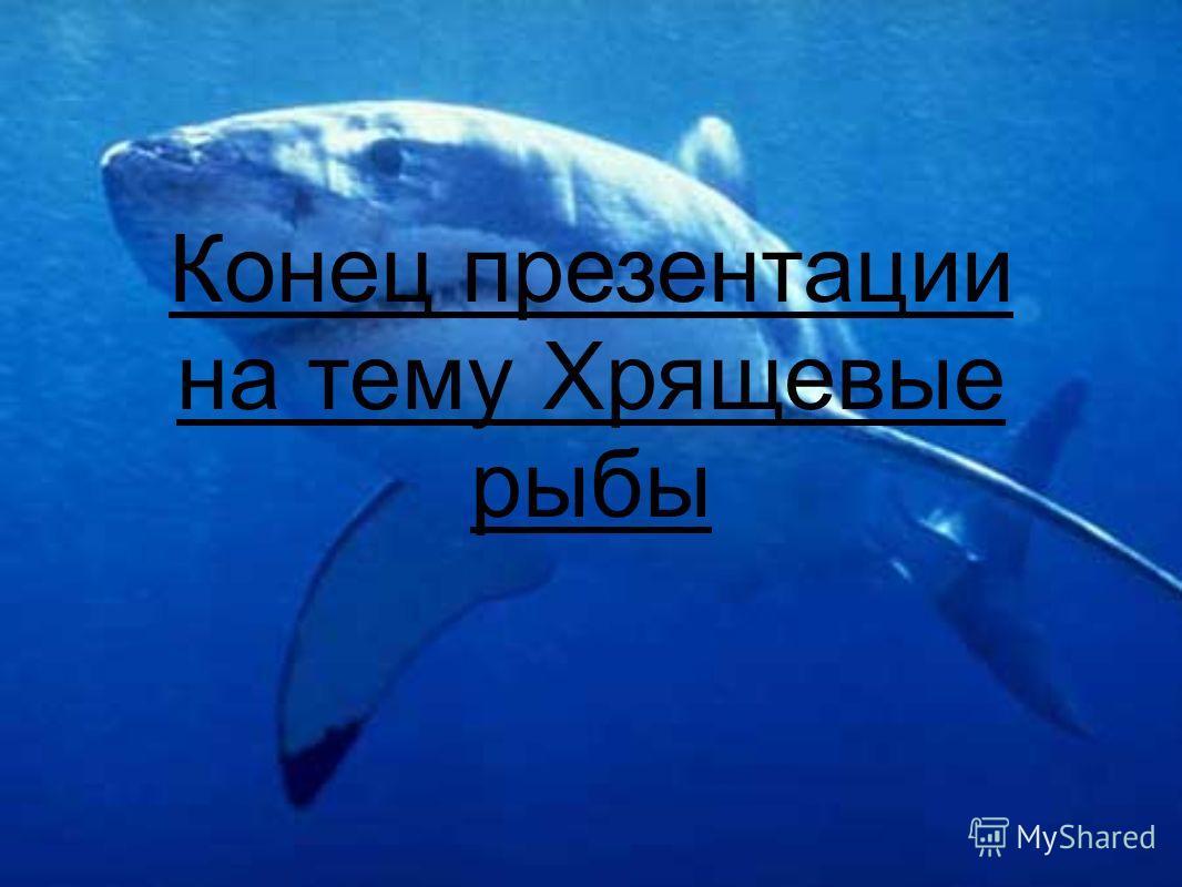 Конец презентации на тему Хрящевые рыбы