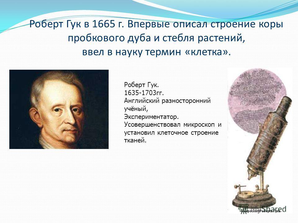 Роберт Гук в 1665 г. Впервые описал строение коры пробкового дуба и стебля растений, ввел в науку термин «клетка». Роберт Гук. 1635-1703гг. Английский разносторонний учёный, Экспериментатор. Усовершенствовал микроскоп и установил клеточное строение т