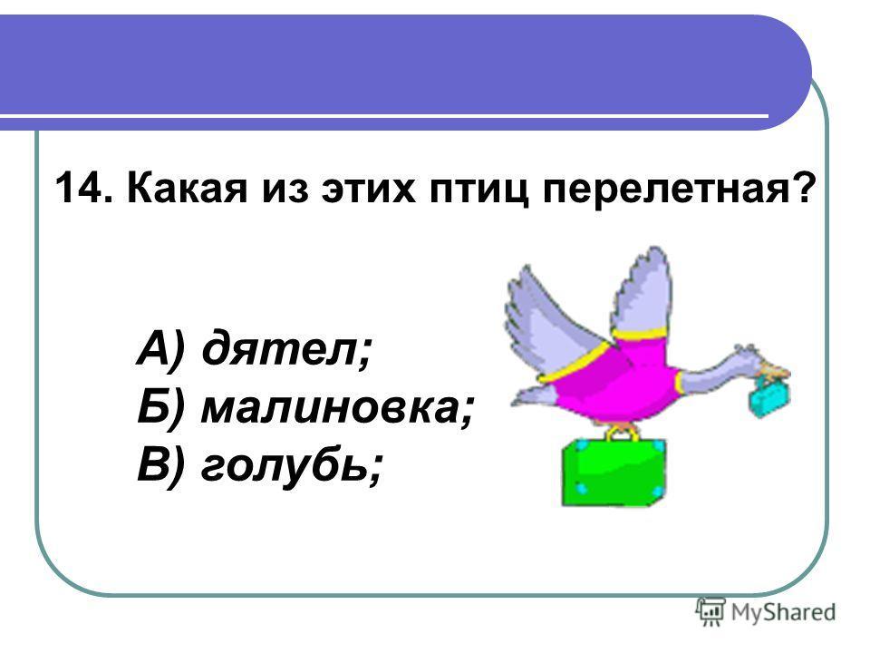 14. Какая из этих птиц перелетная? А) дятел; Б) малиновка; В) голубь;
