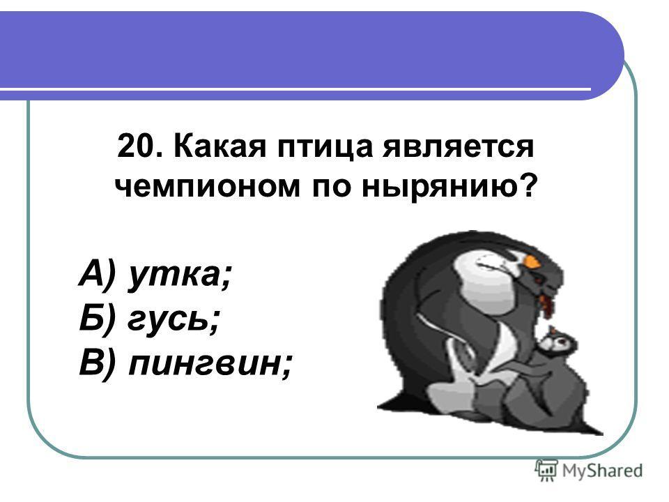20. Какая птица является чемпионом по нырянию? А) утка; Б) гусь; В) пингвин;