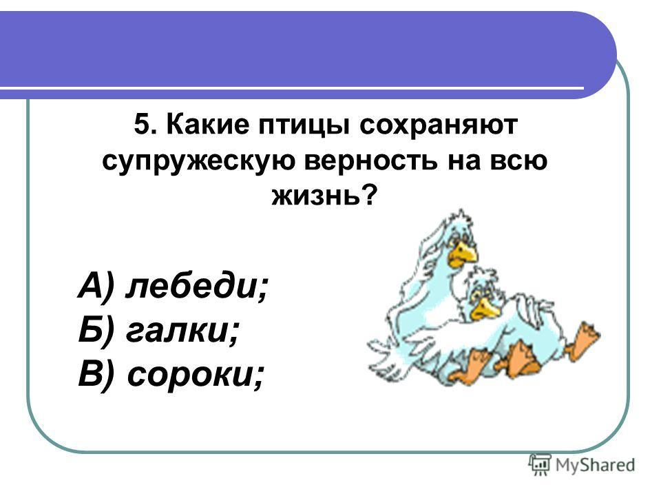 5. Какие птицы сохраняют супружескую верность на всю жизнь? А) лебеди; Б) галки; В) сороки;
