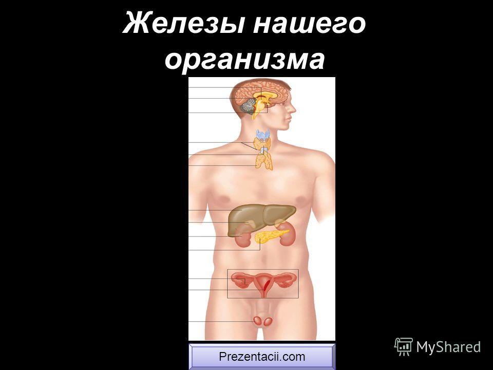 Железы нашего организма Prezentacii.com