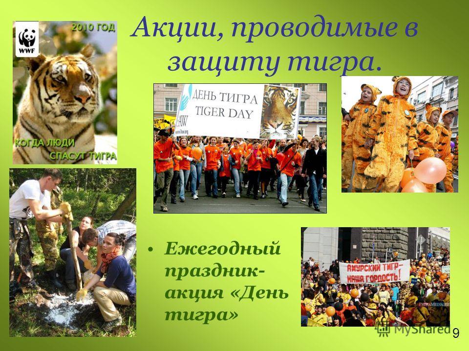 Акции, проводимые в защиту тигра. Ежегодный праздник- акция «День тигра» 9