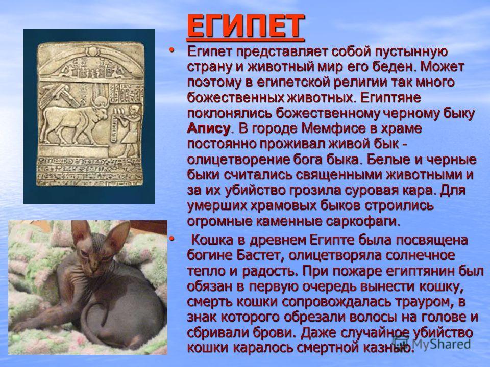 ЕГИПЕТ Египет представляет собой пустынную страну и животный мир его беден. Может поэтому в египетской религии так много божественных животных. Египтяне поклонялись божественному черному быку Апису. В городе Мемфисе в храме постоянно проживал живой б