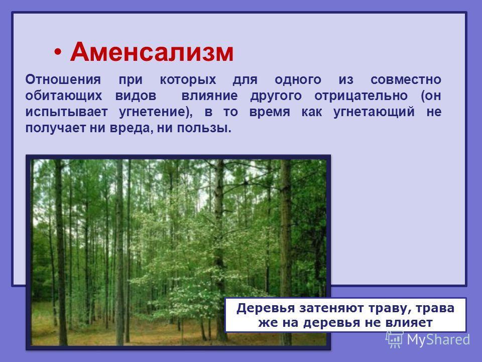 Аменсализм Отношения при которых для одного из совместно обитающих видов влияние другого отрицательно (он испытывает угнетение), в то время как угнетающий не получает ни вреда, ни пользы. Деревья затеняют траву, трава же на деревья не влияет