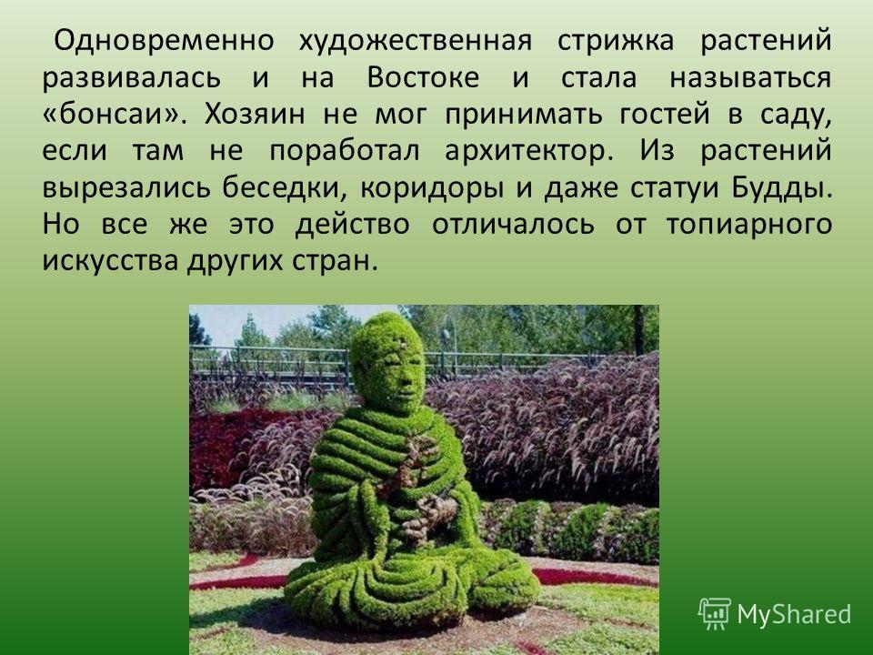 Одновременно художественная стрижка растений развивалась и на Востоке и стала называться «бонсаи». Хозяин не мог принимать гостей в саду, если там не поработал архитектор. Из растений вырезались беседки, коридоры и даже статуи Будды. Но все же это де
