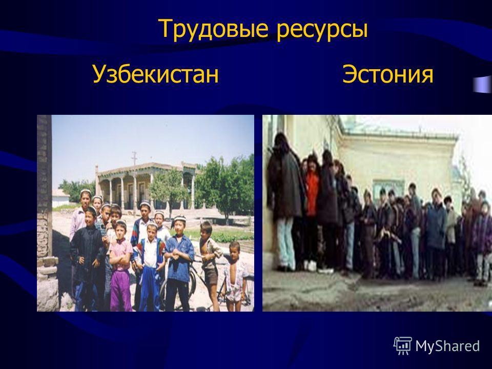 Трудовые ресурсы Узбекистан Эстония