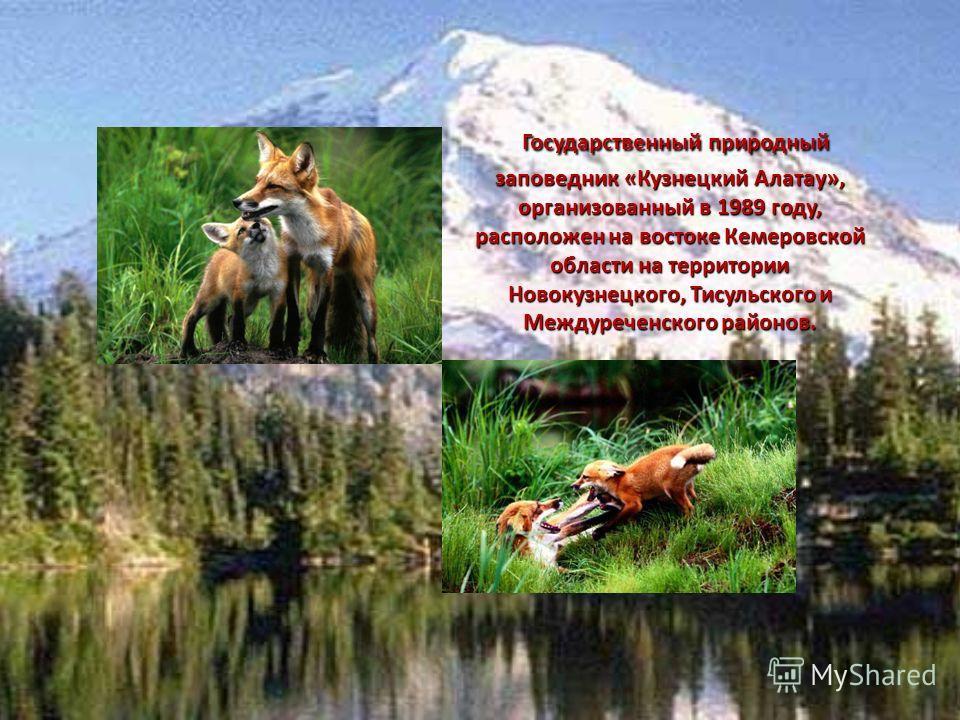 Государственный природный заповедник «Кузнецкий Алатау», организованный в 1989 году, расположен на востоке Кемеровской области на территории Новокузнецкого, Тисульского и Междуреченского районов. Государственный природный заповедник «Кузнецкий Алатау