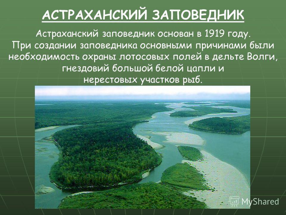 Астраханский заповедник основан в 1919 году. При создании заповедника основными причинами были необходимость охраны лотосовых полей в дельте Волги, гнездовий большой белой цапли и нерестовых участков рыб. АСТРАХАНСКИЙ ЗАПОВЕДНИК