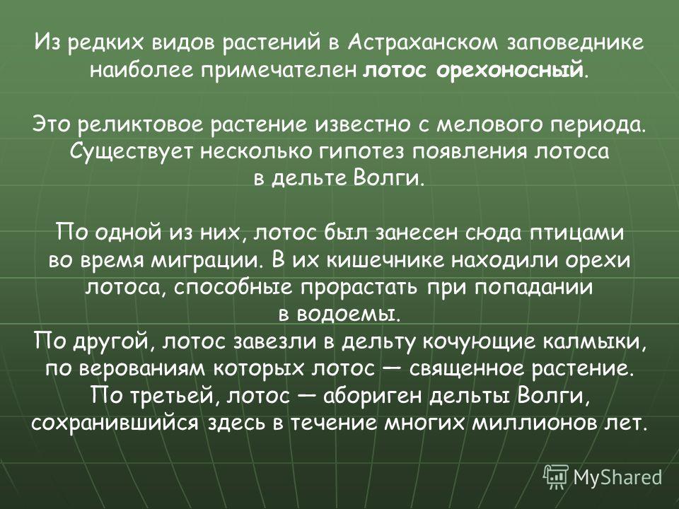 Из редких видов растений в Астраханском заповеднике наиболее примечателен лотос орехоносный. Это реликтовое растение известно с мелового периода. Существует несколько гипотез появления лотоса в дельте Волги. По одной из них, лотос был занесен сюда пт