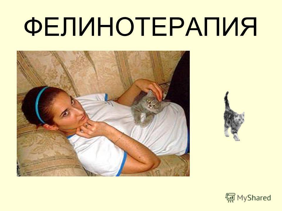 ФЕЛИНОТЕРАПИЯ
