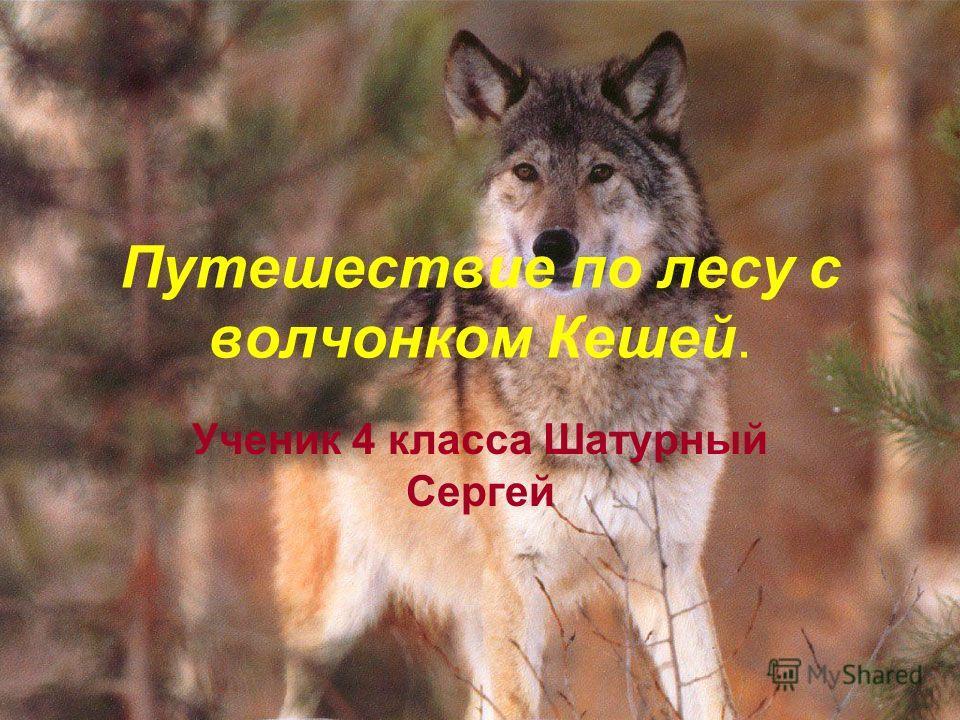 Путешествие по лесу с волчонком Кешей. Ученик 4 класса Шатурный Сергей